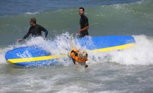 SurfingDogs_x_002_w1k.jpg