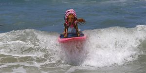 SurfingDogs_x_004_w1k.jpg