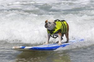 SurfingDogs_x_005_w1k.jpg
