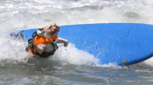 SurfingDogs_x_007_w1k.jpg