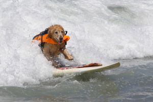 SurfingDogs_x_008_w1k.jpg