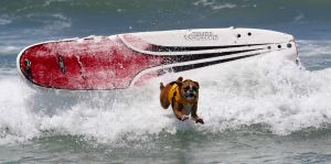 SurfingDogs_x_010_w1k.jpg