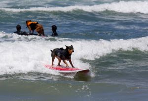 SurfingDogs_x_012_w1k.jpg
