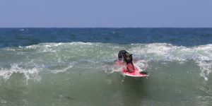 SurfingDogs_x_013_w1k.jpg