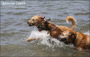 NL_DogWalkers_338824_x_004_WEB.jpg
