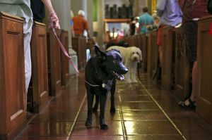 St_Pauls_Blessing_of_Animals_FB_012.jpg